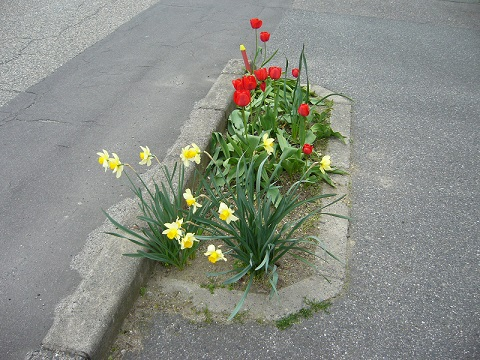 道ばたの花1